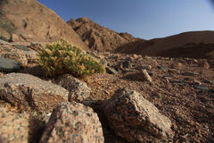 Red mountains and rocks in Egypt Stock Image
