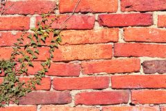 Red mud brick wall texture Stock Images