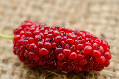 Red mulberry. Royalty Free Stock Images