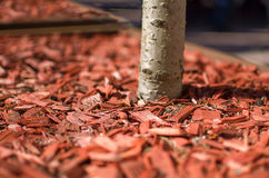 Red mulch Royalty Free Stock Images