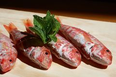 Red mullet. Some red mullet fish on wooden table with mint leaves stock images