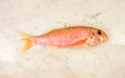 Red Mullet. Fish on a marble slab Royalty Free Stock Images