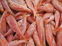 Red mullet. On a market stall royalty free stock photo