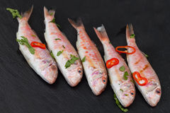 Red Mullet Fish On Black. Raw red mullet fish seasoned with chopped parsley and red pepper, on black background Royalty Free Stock Photos