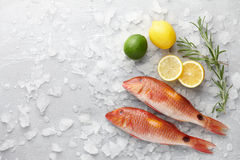 Red mullet fish cooking. Fresh red mullet fish with lemon, lime and rosemary on icy stone background Stock Photo