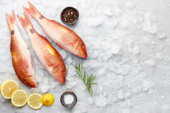 Red mullet fish cooking. Fresh red mullet fish with lemon, rosemary and spices on icy stone background Royalty Free Stock Image