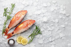 Red mullet fish cooking. Fresh red mullet fish with lemon, salt and rosemary on icy stone background Royalty Free Stock Photos