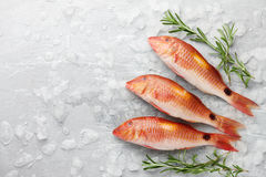 Red mullet fish cooking Royalty Free Stock Image