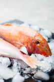 Red mullet fish on ice cubes Black stone board Royalty Free Stock Image