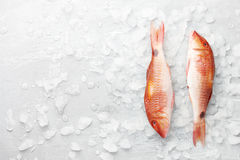 Red mullet fish on icy background Stock Photo