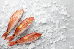 Red mullet fish on icy background Royalty Free Stock Photos