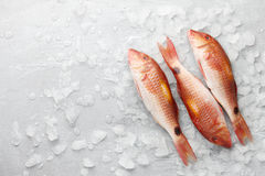 Red mullet fish on icy background Stock Photography