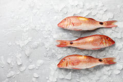 Red mullet fish on icy background Royalty Free Stock Photography