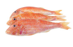 Red mullet fish isolated Stock Photo