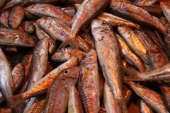 Red mullet fish at the market stock photo