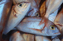 Red mullet Royalty Free Stock Images