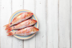 Red mullet fish on plate Royalty Free Stock Images