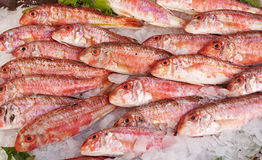 Red mullet fish for sale. Fresh red mullet for sale on fish market of Marseille, Mediterranean France Royalty Free Stock Photography