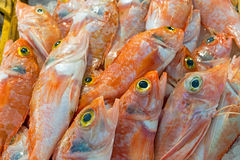 Red mullet fish for sale Royalty Free Stock Photos