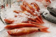 Red mullet on fishmonger's slab. Fresh red mullet (goat fish) on ice on fishmonger's slab Royalty Free Stock Images