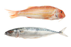 Red mullet and mackerel Royalty Free Stock Photo