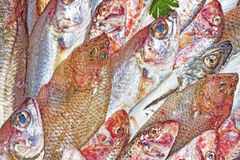 Red mullet and mediterranean fish Royalty Free Stock Photos