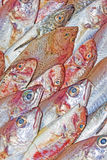 Red mullet and mediterranean fish Stock Photo