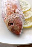 Red mullet Stock Photography