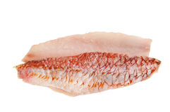 Red mullet stock photos