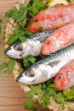 Mullets and mackerels Royalty Free Stock Photography