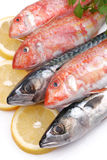 Mullets and mackerels Royalty Free Stock Photos