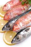 Mullets and mackerels Royalty Free Stock Photos