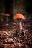Red mushroom Stock Images
