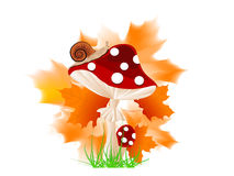 Red mushroom Royalty Free Stock Images