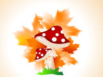 Red mushroom Stock Images