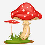 Red Mushroom cartoon. Spotted poisonous Amanita with green grass Royalty Free Illustration