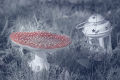 Red mushroom fungi. With white lantern Royalty Free Stock Image