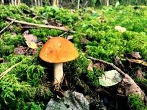 Red mushroom Stock Photo