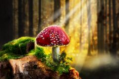 Red mushroom in sunny forest royalty free stock image