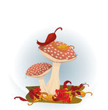Red Mushrooms Royalty Free Stock Photos