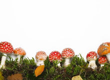 Red Mushrooms Stock Image