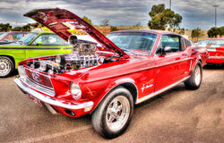 Red Mustang Royalty Free Stock Photo