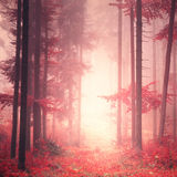 Red mystic color forest. Red mystic color fantasy light forest scene background Royalty Free Stock Image