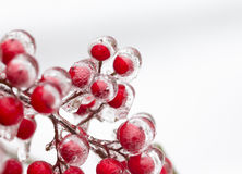 Red nandina berries covered in ice Stock Photos