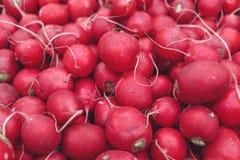 Red natural organic radishes Stock Image