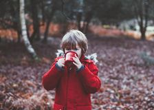 Red, Nature, Winter, Vertebrate Stock Images