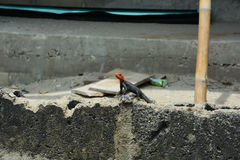 Red neck lizard. A red neck lizard whiling away its time on a cement fence. sunny afternoon in lekki, lagos, Nigeria Stock Photos