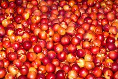 Red nectarines Royalty Free Stock Photo