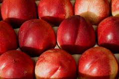Red nectarines. Background of ripe red smooth skinned nectarines royalty free stock photography
