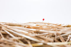 Red needle is in the haystack Stock Photo